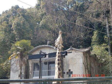動物園 003.jpg