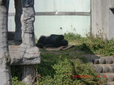 動物園 005.jpg